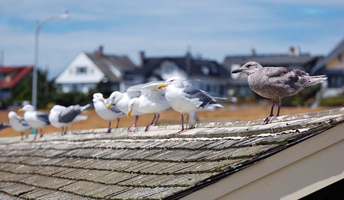 skrämma bort fåglar från balkongen